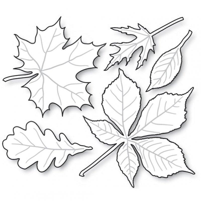 Шаблоны картинки осенних листьев для вырезания