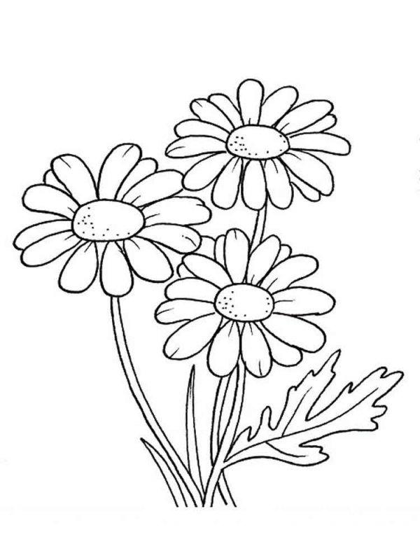 Рисунок ромашки для раскрашивания, марта