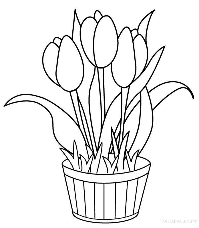 тюльпаны трафареты картинки это
